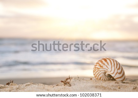 nautilus shell on beach  under golden tropical sun beams, shallow dof - stock photo