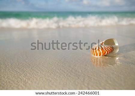 nautilus shell on white beach sand, against sea waves, shallow dof - stock photo
