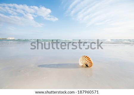 nautilus shell on white Florida beach sand under sun light, shallow dof - stock photo