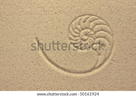 Nautilus Shell Pattern in Sand - stock photo