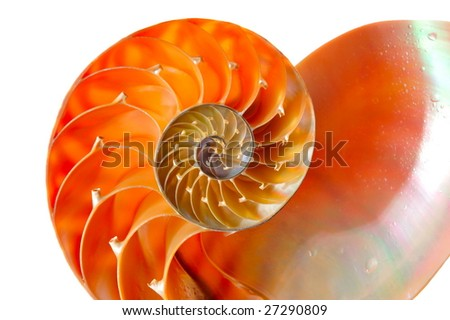 nautilus shell section against white