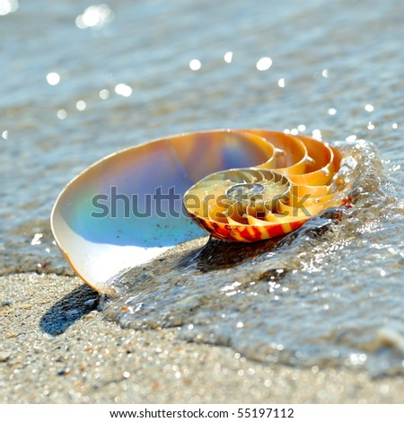 nautilus shell section on wet sand - stock photo