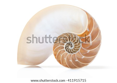 Nautilus shell section on white with soft shadow, clipping path - stock photo