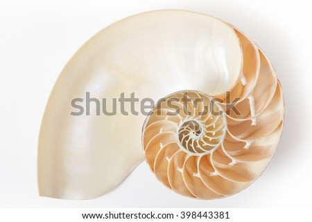 Nautilus shell section, perfect Fibonacci pattern on white with soft shadow, clipping path included - stock photo