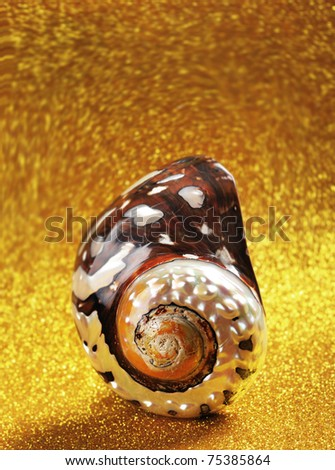 Nautilus Shell with room at top for your type. - stock photo