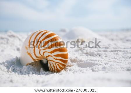 nautilus shell with sea wave,  Florida beach  under the sun light - stock photo