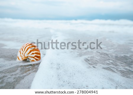 nautilus shell with sea wave,  Florida beach  under the sun light, live action - stock photo