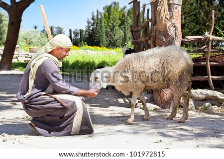 NAZARETH, ISRAEL - APRIL 24: Man dressed as a first-century herder feed his sheep at Nazareth Village, a representation of life at the time of Jesus in Nazareth, Israel, Apr 24, 2012 - stock photo