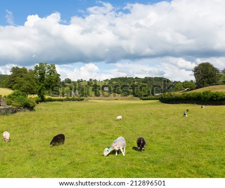 Near Sawrey countryside view by Hawkshead Lake District former village home to Beatrix Potter - stock photo