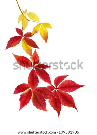 Neat arrangement of beautifully hanging autumn leaves on white background - stock photo