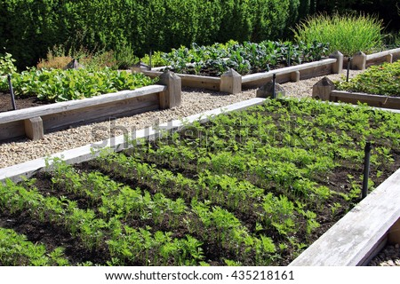 Neatly organized and raised vegetable garden.