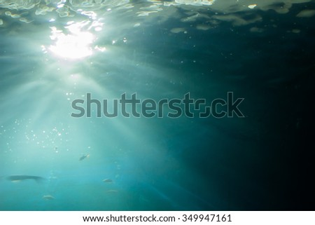 Needle fish underwater in  sea while scuba diving in natural World - stock photo