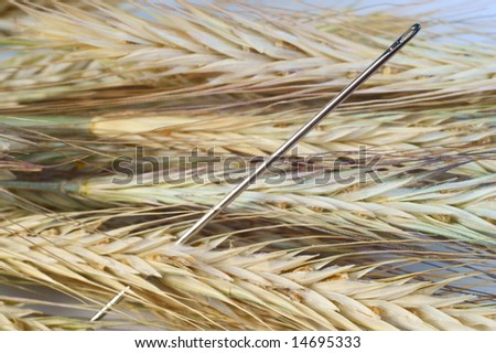 Needle in a haystack. Macro. - stock photo