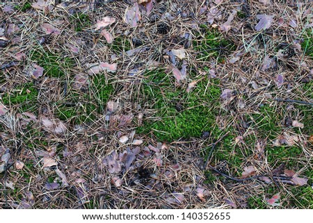 needles ground cover texture, background - stock photo