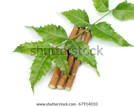 Neem leaves and twigs - stock photo