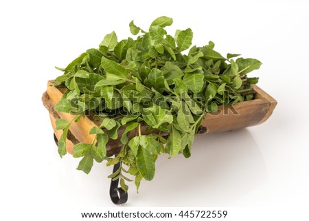Neem, Neem Tree, Nim, Margosa, Quinine, Holy tree, Indian Margosa Tree, Pride of china, Siamese Neem Tree: Vegetables and herbs with medicinal properties. - stock photo