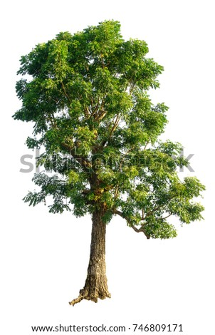 neem tree leaves as insect repellant Facial wash from neem tree leaves - download as word doc theotrical framework: some people considered the neem tree leaves as an insect repellant.