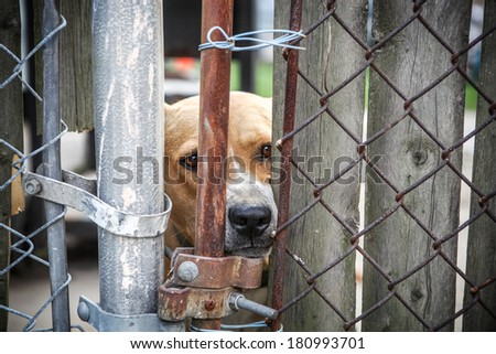 Neglected dog behind fence - stock photo