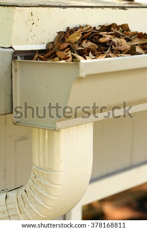 Neglected gutter and downspout clogged with rotting oak leaves - stock photo