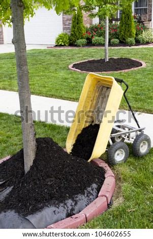 Neighborhood beautification starts with a mulching operation around the tree trunks. - stock photo