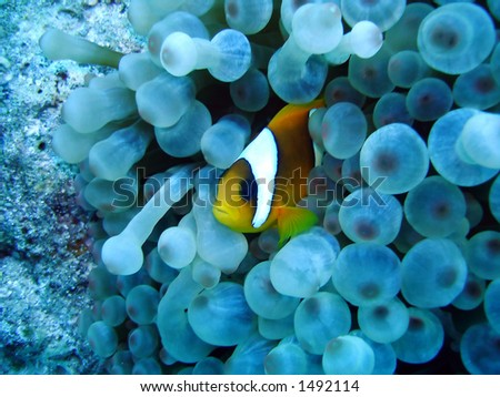nemo - stock photo