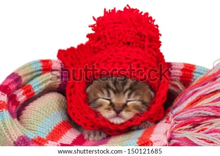 Neonate kitten on a warm knitted scarf over white background - stock photo