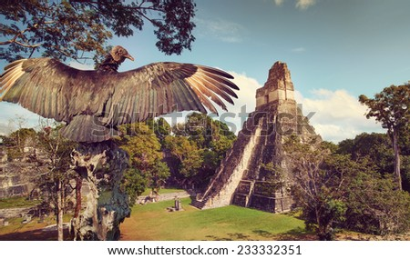 Neophron looking at the ancient ruins of the Mayan city of Tikal. Central America, Guatemala - stock photo