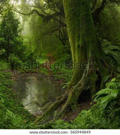 Nepal Jungle - stock photo