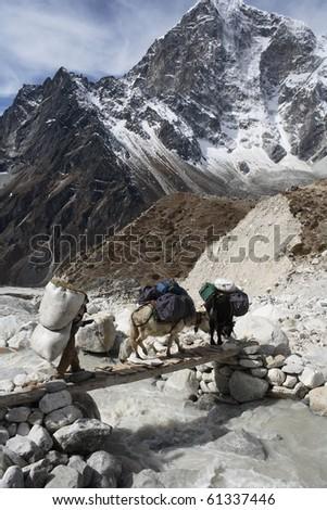Nepalese landscape, yaks - stock photo