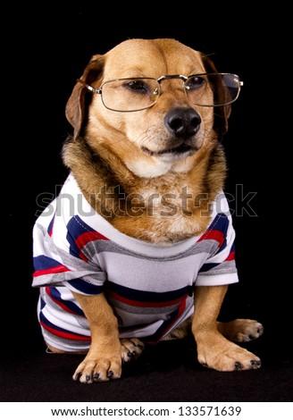 nerd dog and eyeglasses - stock photo