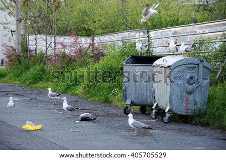 NESEBAR, BULGARIA - MAY 05, 2015: Seagulls make a mess around the garbage containers in the street of the coastal town