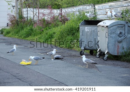NESEBAR, BULGARIA - MAY 05, 2015: Seagulls make a mess around the garbage containers in the street of the coastal town - stock photo