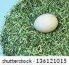 Nest Egg; a single white egg laid in a soft, secure nest of shredded currency over a sky blue background.  - stock photo