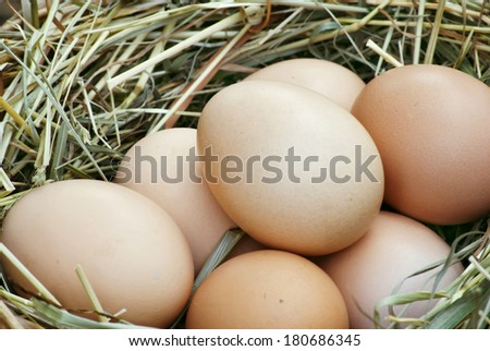 nest for chickens to make a lot of eggs