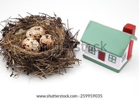 nest of bird and House on white background - stock photo
