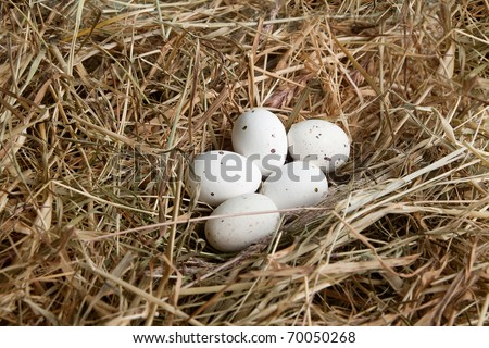 Nest of hay with white easter eggs - stock photo