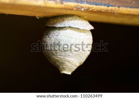 Nest of the Common Wasp, Vespula vulgaris, hanging on a plank - stock photo
