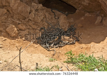 Nest of vipers - stock photo