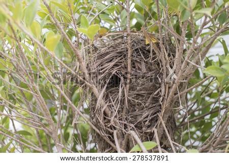 Nest on tree - stock photo