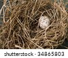 Nest with Cardinal Egg - stock photo