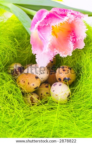 Nest with easter eggs - stock photo