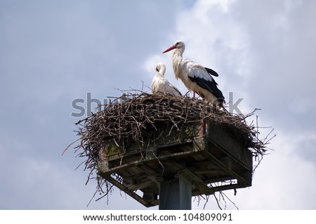 Nest with two white storks