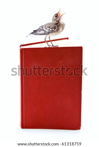 Nestling of bird (wagtail) on book. Isolated on white - stock photo