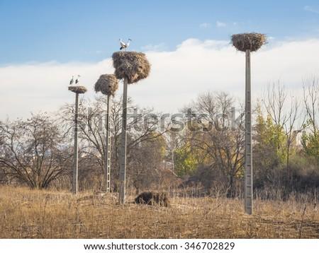 nests antennas - stock photo