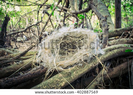 Nests Bird in the forest (Vintage). - stock photo