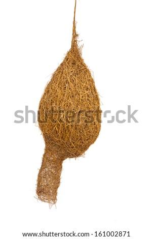 Nests weaverbird - stock photo