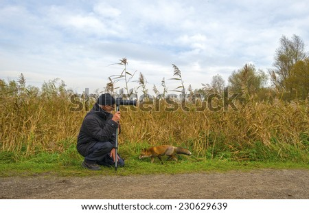Netherlands, Flevoland - November 14, 2014: Photographer taking pictures of a red fox in nature - stock photo