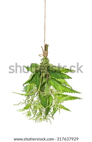 Nettle herb leaves isolated on white background. Food ingredient. Condiment. Fresh herbs - stock photo