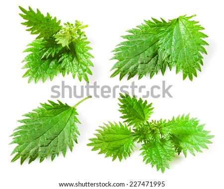 Nettle leaves isolated on white background. Collection - stock photo