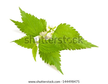 Nettle with flowers isolated on white - stock photo